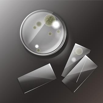Placa de petri de vector con moldes, vista superior de colonias bacterianas aislada sobre fondo