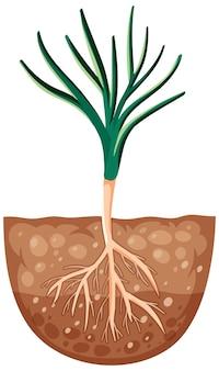 Planta en crecimiento con raíces en el suelo.