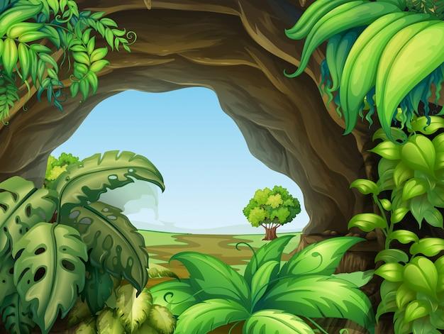 Planta en la cueva