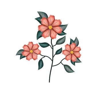 Planta de flor de geranio en fondo blanco
