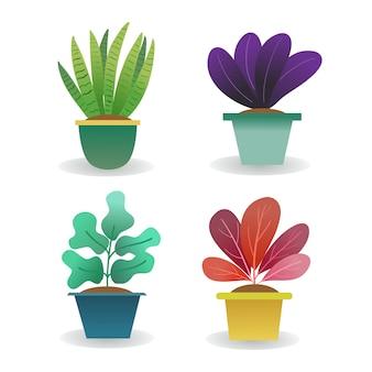 Planta de gradiente natural moderna en maceta