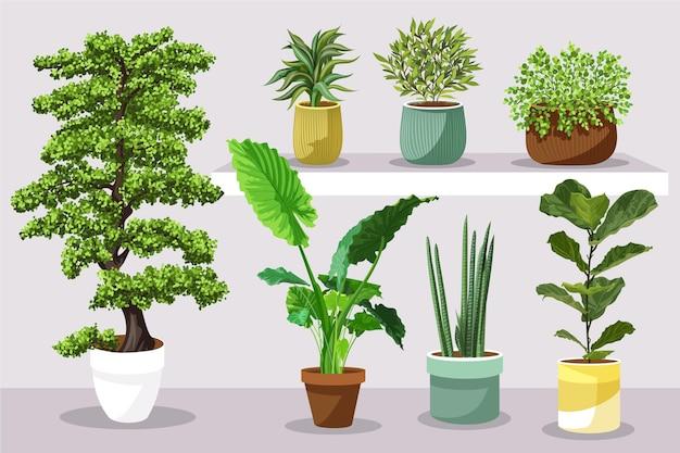 Planta de interior plana en conjunto de macetas.