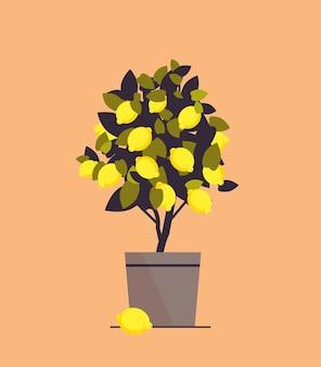 Planta de limón en maceta creciente árbol frutal en maceta ilustración vectorial