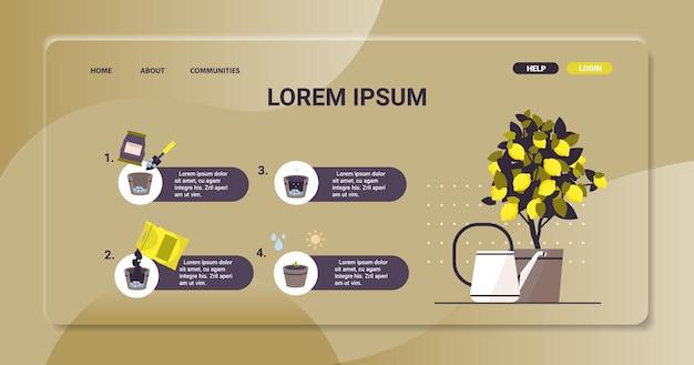 Planta de limón en maceta creciente árbol frutal en maceta trabajo en el jardín agricultura infografía concepto de proceso de siembra