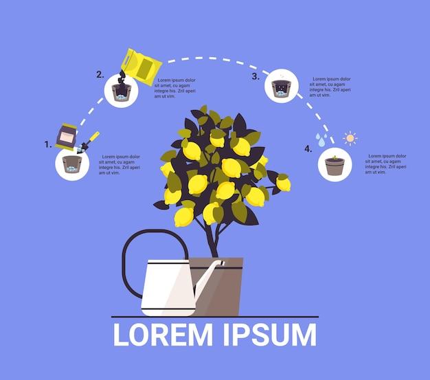 Planta de limón en maceta creciente árbol frutal en maceta trabajo en el jardín agricultura infografía proceso de plantación concepto copia espacio ilustración vectorial