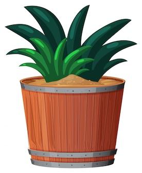Planta en maceta con hojas verdes sobre un blanco aislado