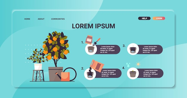 Planta de naranja en maceta creciente árbol frutal en maceta trabajo en el jardín agricultura infografía concepto de proceso de plantación espacio de copia horizontal ilustración vectorial