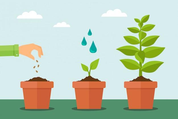 Planta que crece de semilla a árbol