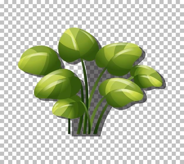 Planta tropical sobre fondo transparente