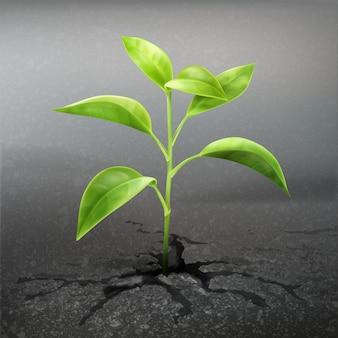 Planta de vector brote a través del asfalto de cerca vista frontal