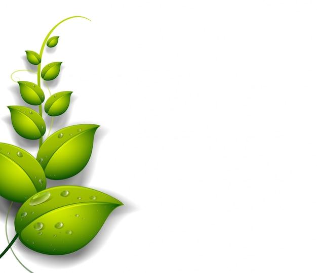 Una planta verde con gotas de agua