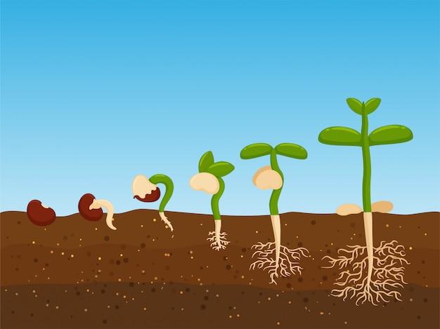 Plantar árboles a partir de semillas agrícolas.