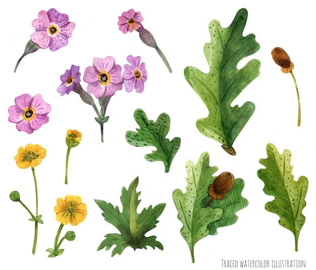 Plantas de acuarela de escocia