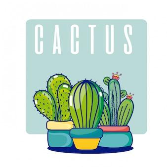 Plantas de cactus