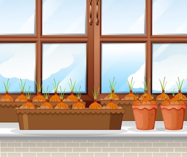 Plantas de cebollas con escena de fondo de ventana.