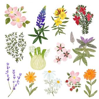 Plantas cosméticas, lápices estilo lindo dibujado a mano