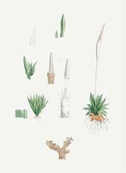 Plantas disecadas