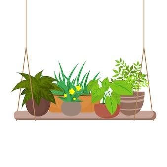 Plantas domésticas de interior en la ilustración del estante colgante
