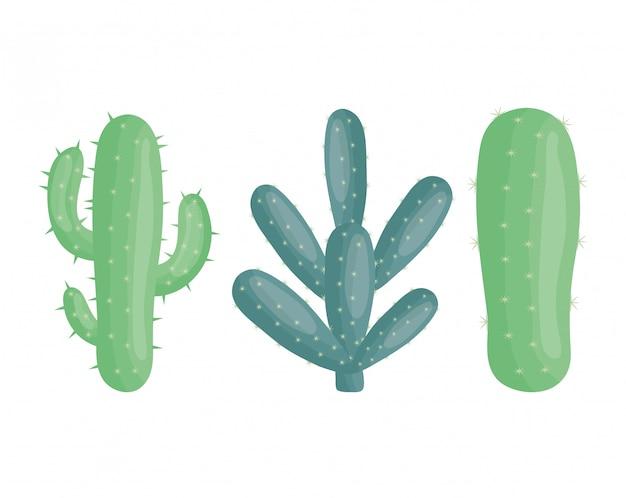 Plantas exóticas de cactus en macetas de cerámica.