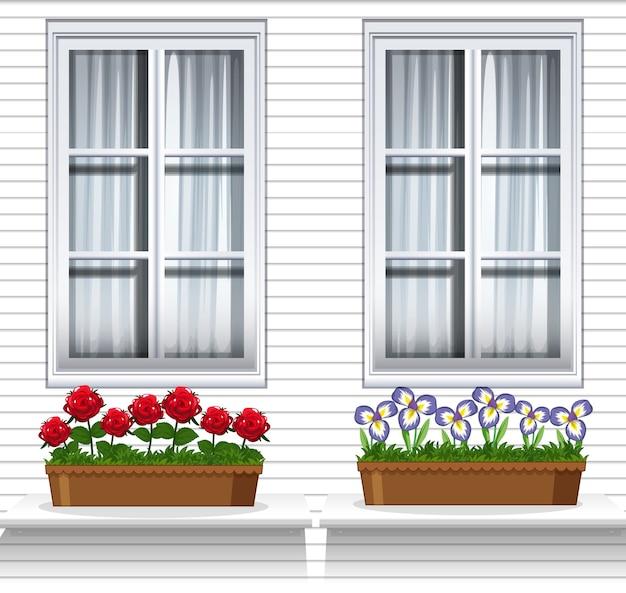 Plantas de flores cerca de la ventana