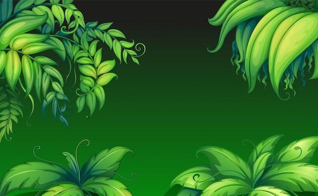 Plantas frondosas verdes