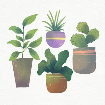 Plantas de interior de acuarela pintadas a mano