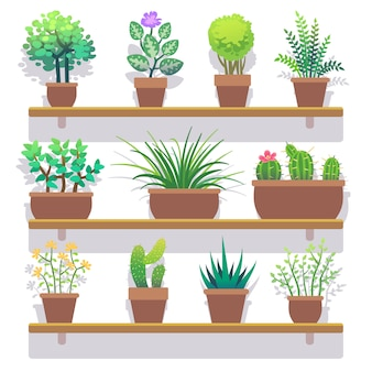 Plantas de interior en macetas conjunto de iconos planos