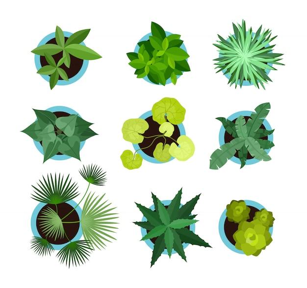 Plantas de interior en macetas, vista superior de conjunto de iconos, flores de mascotas verdes, palma en estilo plano aislado en el fondo blanco.