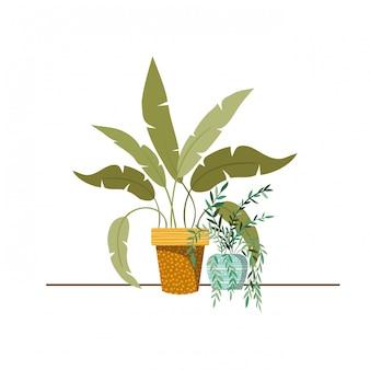 Plantas de interior con macetas