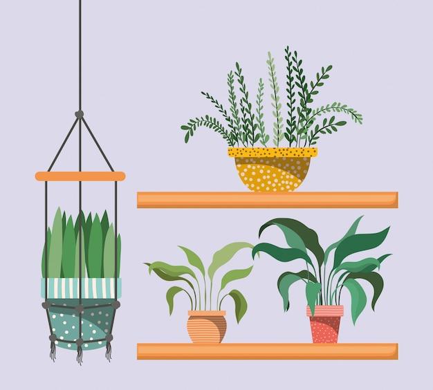 Plantas de interior en perchas y estantes de macramé