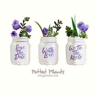 Plantas en macetas blancas románticas