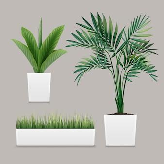 Plantas en macetas en contenedores para uso en interiores como planta de interior y decoración