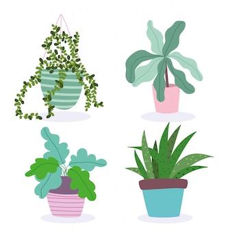 Plantas en macetas plantas de interior decoración jardinería interior