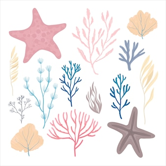 Plantas marinas y algas marinas acuáticas.