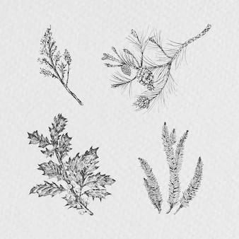 Plantas navideñas dibujadas a mano
