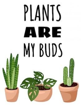 Las plantas son mis brotes. folleto de plantas suculentas en maceta. acogedor estilo escandinavo lagom