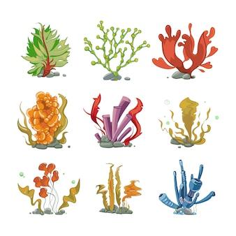 Plantas submarinas en estilo vectorial de dibujos animados. vida del océano, mar submarino, ilustración de algas de la naturaleza