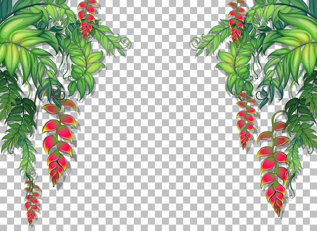 Plantas tropicales y hojas en transparente.