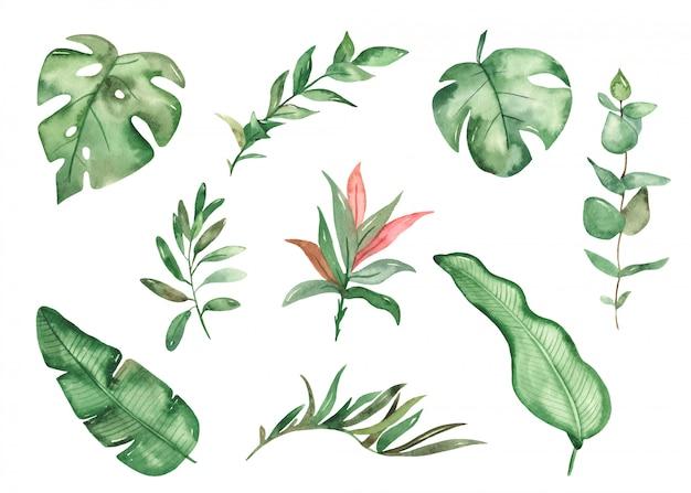 Plantas tropicales verdes en estilo acuarela