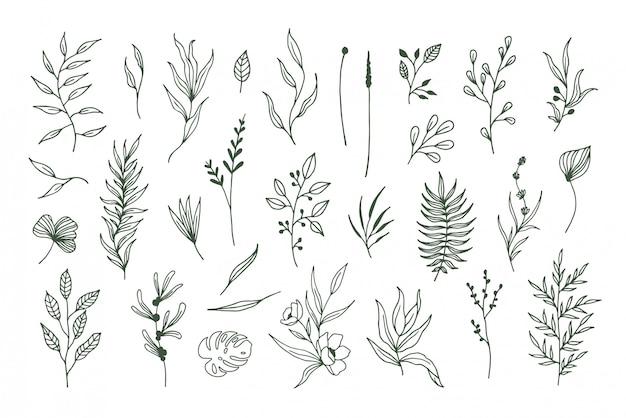 Plantas vectoriales dibujadas a mano, elementos florales y hojas.