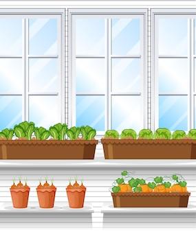 Plantas vegetales con escena de fondo de ventana