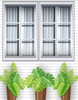 Plantas verdes frente a la casa.