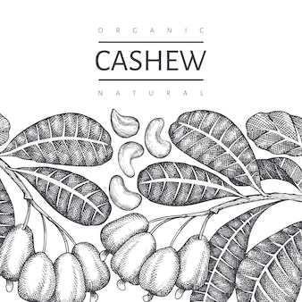 Plantilla de anacardo boceto dibujado a mano. ilustración de alimentos orgánicos sobre fondo blanco. fondo botánico de estilo grabado.