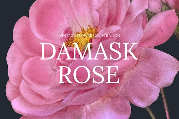 Plantilla de banner web floral con fondo de rosa damasco, remezclado de obras de arte de dominio público