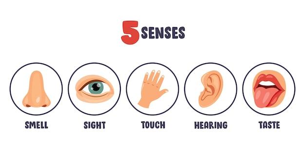 Plantilla de cinco sentidos con órganos humanos