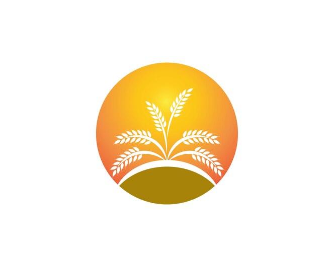 Plantilla de logotipo de arroz de trigo