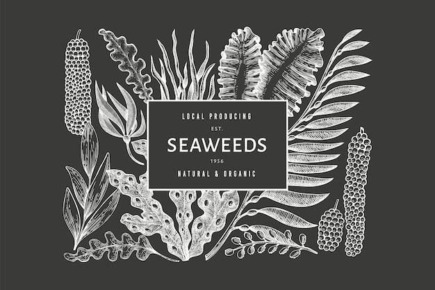 Plantilla de diseño de algas. ilustración de algas vector dibujado a mano en pizarra. bandera de comida de mar de estilo grabado. fondo de plantas marinas vintage