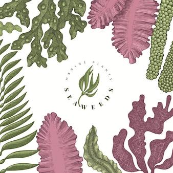 Plantilla de diseño de color de algas. ilustración de algas vector dibujado a mano. bandera de comida de mar de estilo grabado. fondo de plantas marinas retro