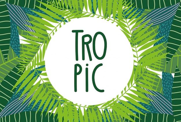 Plantilla de diseño de follaje de palmeras exóticas de hojas tropicales