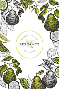 Plantilla de diseño de rama de bergamota.